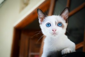 why is my cat crying? Conscious Cat Care