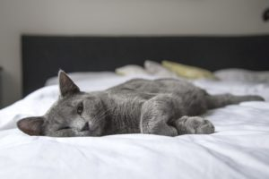 how does parvo affect cats?