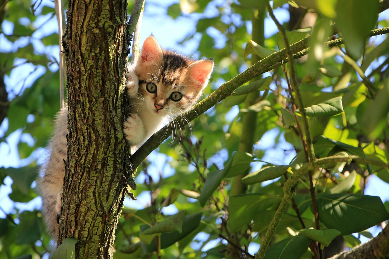 cat lost in a tree